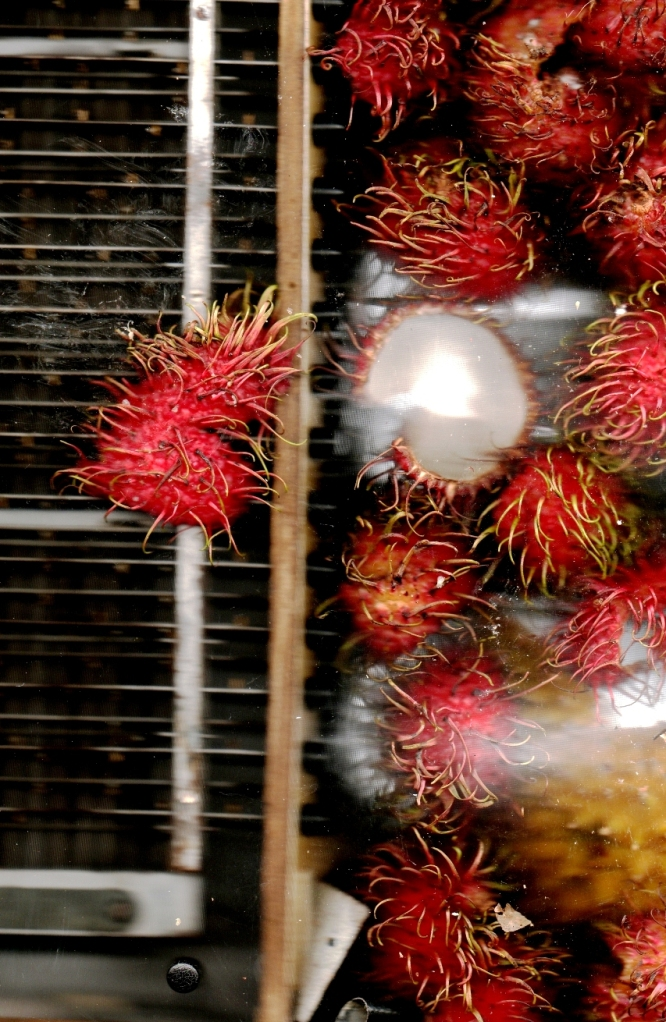 Scan janvier 2011, Interieur accordeon, rambutan, durian, ampoule baladeuse.AUTOMNE