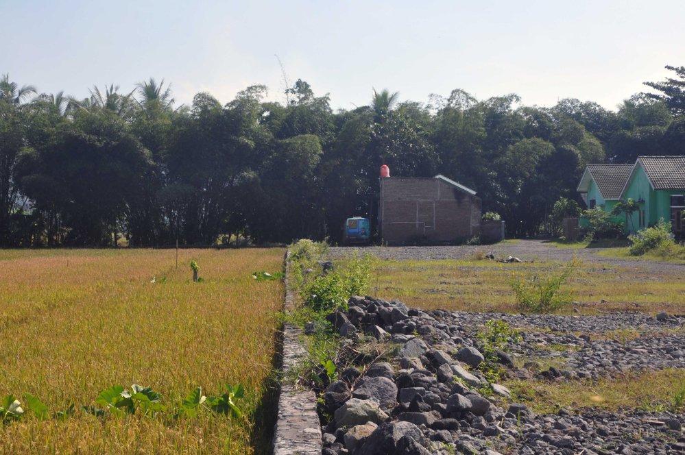 Sous la haie de bambou chez Dori et mas Mo ong
