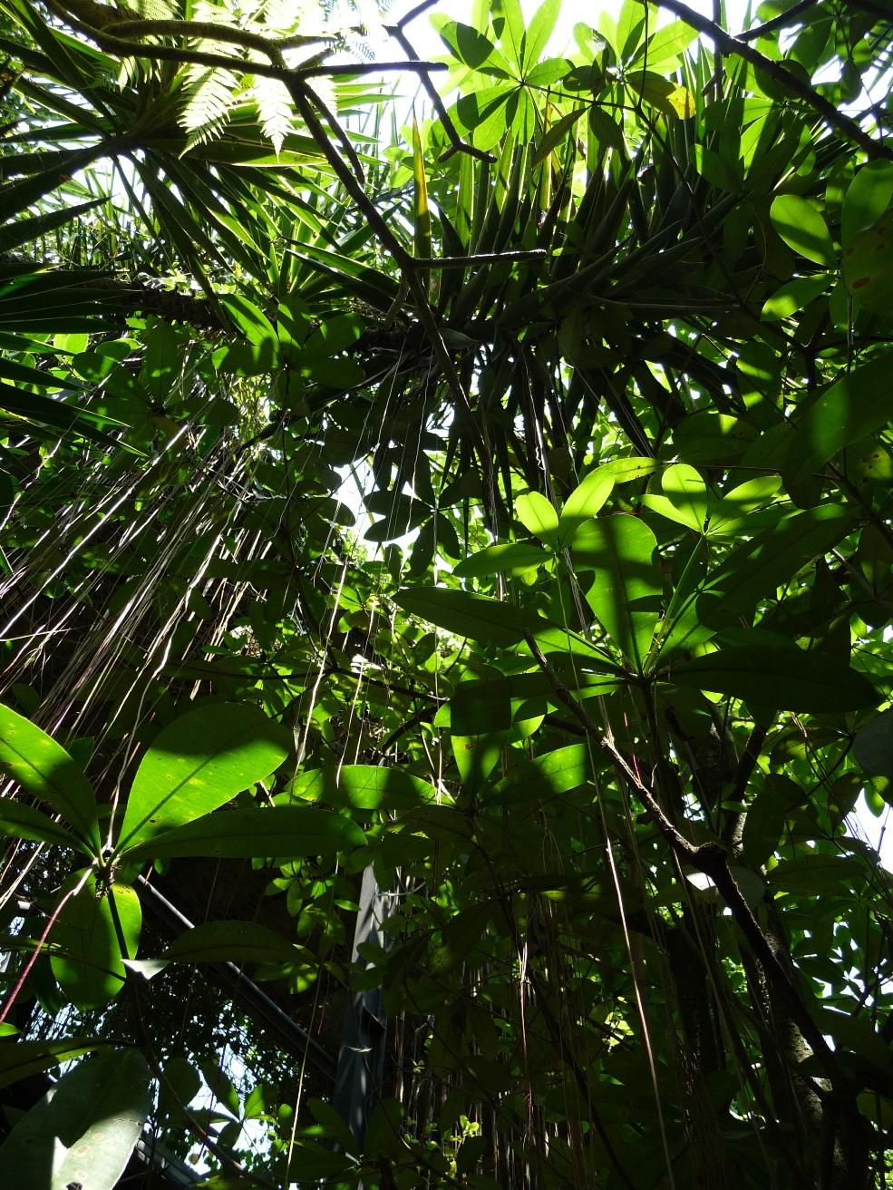 jardin du Sarang Jogya.